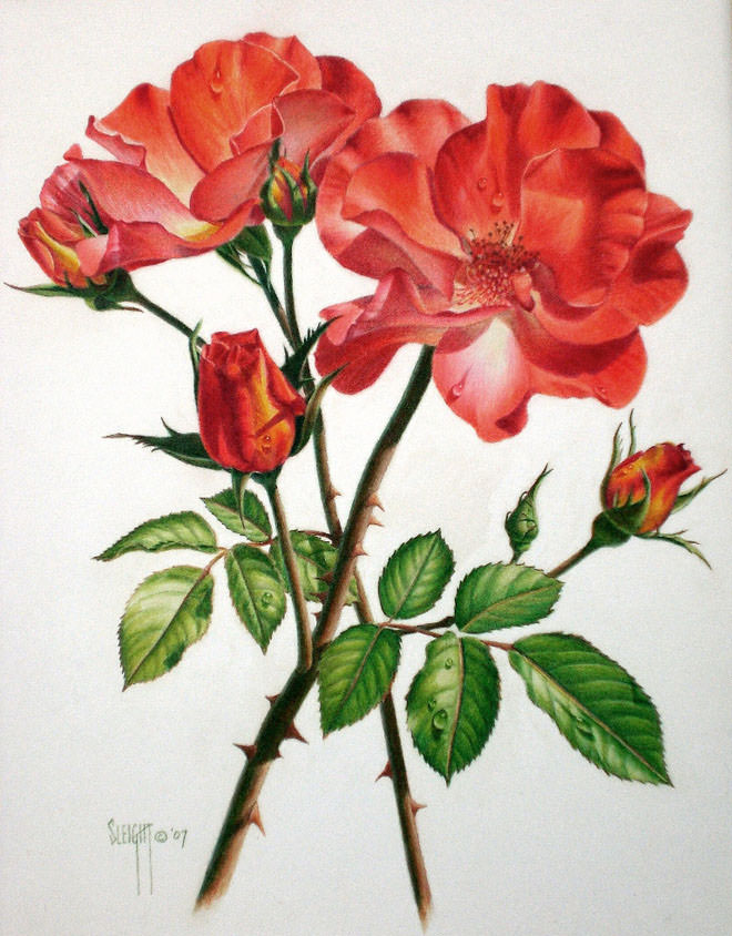 Drawing Of A Flower Step By Step Pics Download