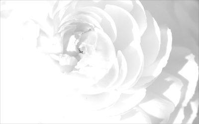 20+ White Backgrounds | Photoshop | FreeCreatives