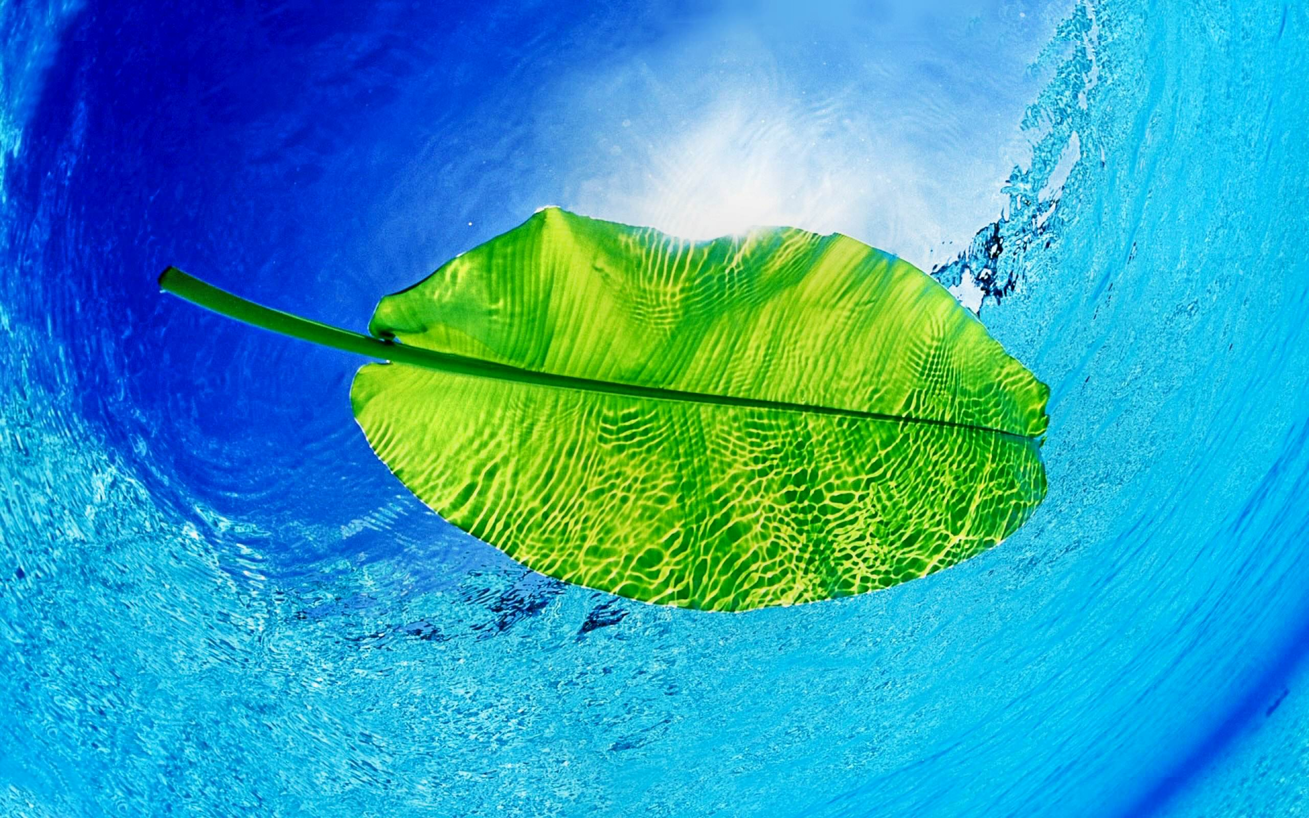 3d Leaves And Water Drop Wallpaper 21 Leaf Backgrounds Wallpapers Images Freecreatives