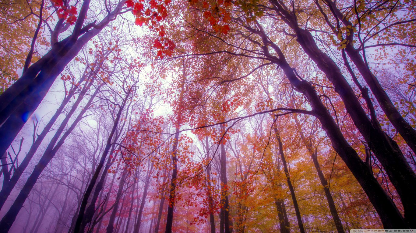 Colorful Fall Scene Wallpaper 21 Autumn Wallpapers Backgrounds Images Freecreatives