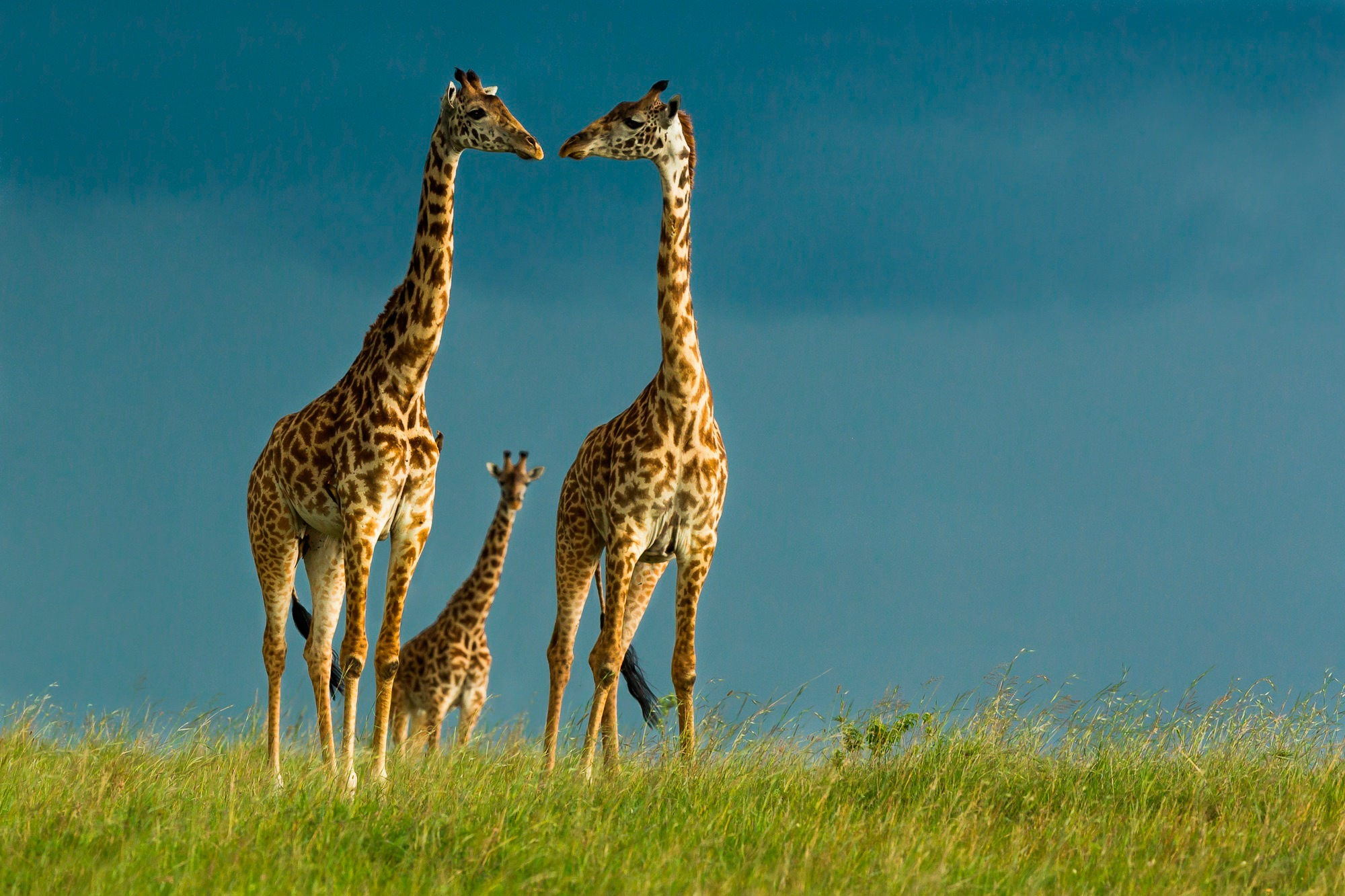 Cute Patterns For Wallpapers 21 Giraffe Wallpapers Backgrounds Images Freecreatives
