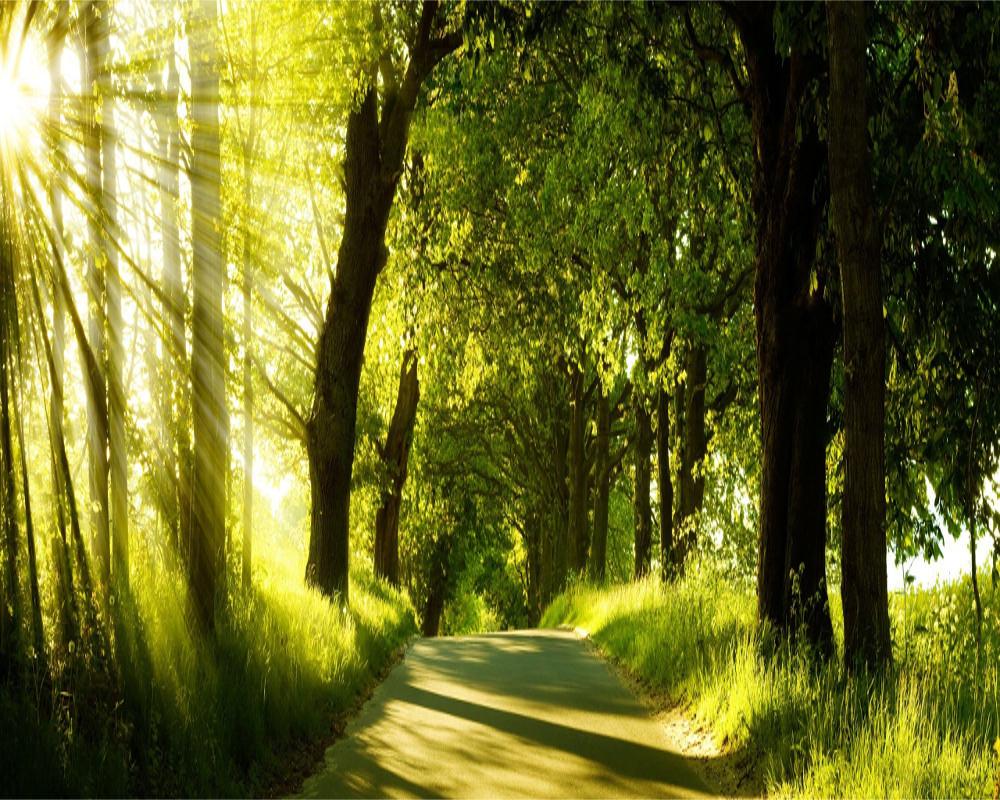 Wallpaper Effect 3d 16 Green Nature Backgrounds Wallpapers Frecreatives
