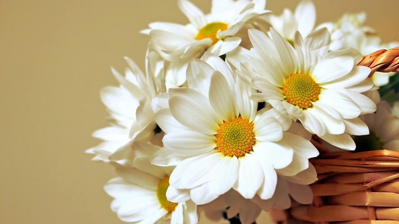 Pc Fall Wallpaper 22 Daisy Flower Wallpapers Flower Backgrounds Images