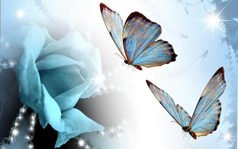 Amazing 3d Art Wallpapers Hd Blue Rose Butterflies Wallpaper Download Free 120505