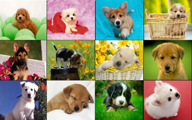 Cute Puppies Full Hd Wallpapers Hd Dog Collage Wallpaper Download Free 122983