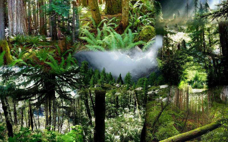 Animated Happy New Year D Hd Pacific Northwest Forests Wallpaper Download Free 73285
