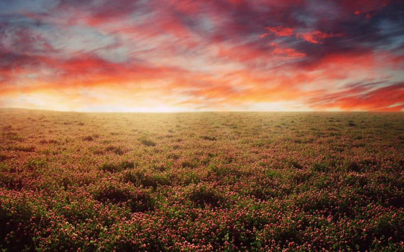 Cute Animated Hd Wallpapers Hd The Open Field Wallpaper Download Free 75747