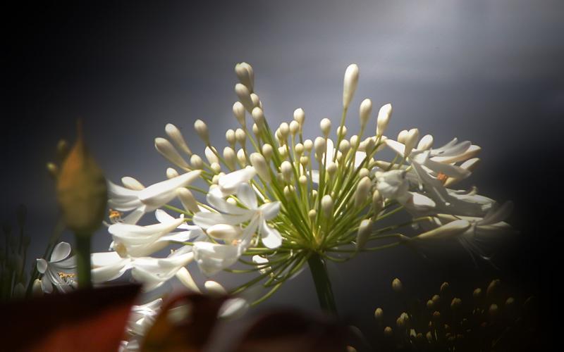 Search Cute Good Night Wallpapers Hd Flower Bueaty Wallpaper Download Free 98818