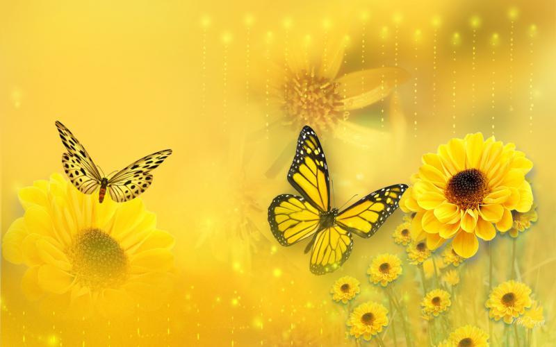 Cute Baby Wallpaper Download Full Hd Hd Spring Arrivals Wallpaper Download Free 78099