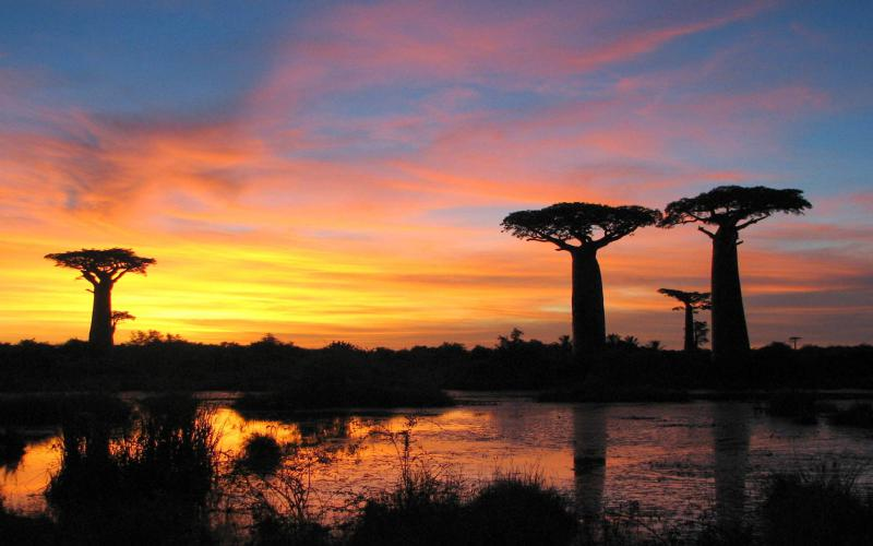 Good Night 3d Moving Wallpaper Hd Sunset Baobabs Madagascar Wallpaper Download Free 78924