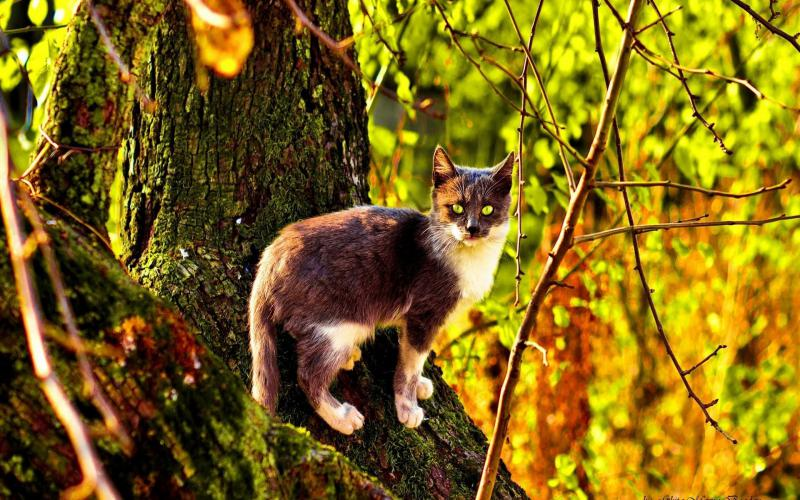 Cute White Cat Wallpaper Hd Wild Cat In The Woods Wallpaper Download Free 118056