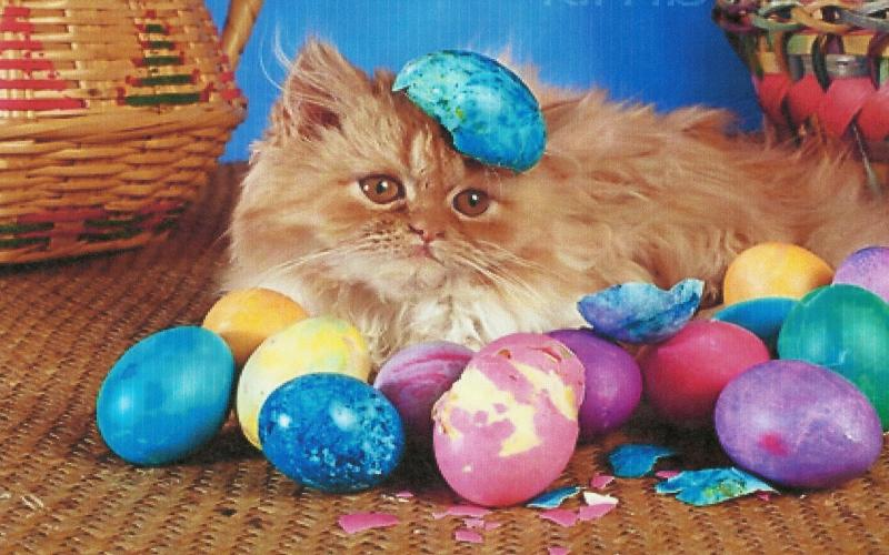 Cute Anime Kitty Wallpaper Hd A Easter Kitten With Color Eggs Wallpaper Download