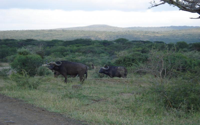 3d Bollywood Wallpaper Download Hd African Buffalo Habitat Wallpaper Download Free 112657