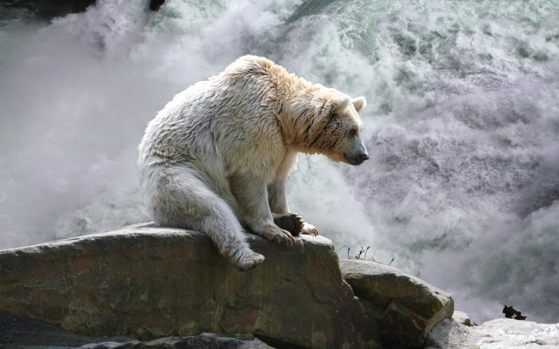 Wallpaper Hd Happy New Year Hd Bear At Waterfall Wallpaper Download Free 107866