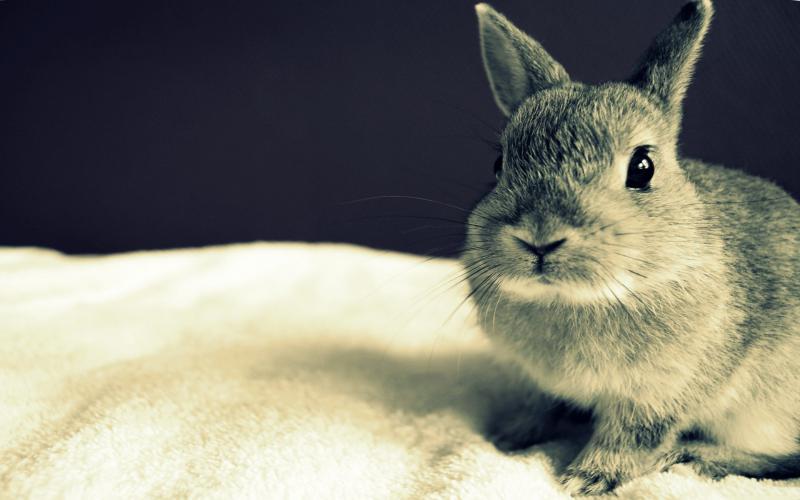 Foto Wallpaper 3d 画像 子うさぎ・バニーの壁紙あつめました。【デスクトップ壁紙・タブレット壁紙/bunny/rabbit