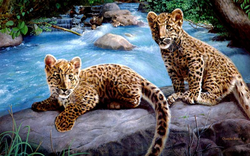 Good Morning Wallpaper Cute Hd Leopard Cubs Wallpaper Download Free 119221