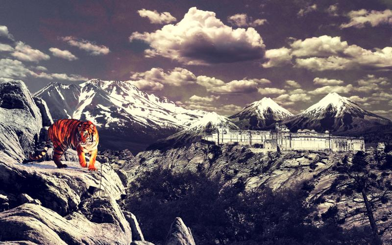 Happy New Year 2013 3d Wallpaper Hd Tiger On Mountain Wallpaper Download Free 104996