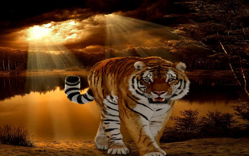 3d Wallpaper Cute Baby Hd Tiger Sunset Wallpaper Download Free 110386