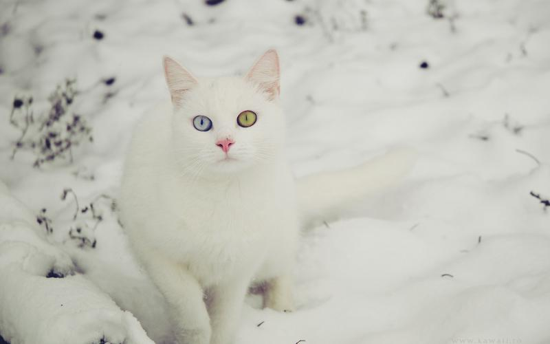 Animated Happy New Year D Hd White Cat In Snow Wallpaper Download Free 105416