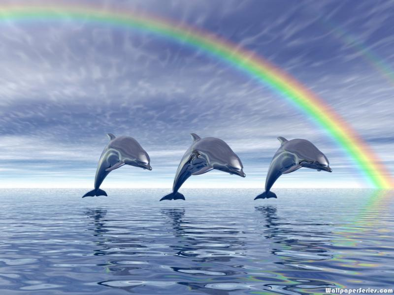 Cute Baby Dolphin Wallpaper Hd Dolphin Rainbow Wallpaper Download Free 140636