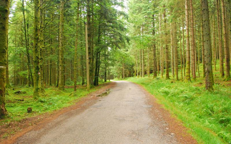 Free Animated Nature Wallpapers For Desktop Hd Forest Trees Nature Roads High Resolution Pictures