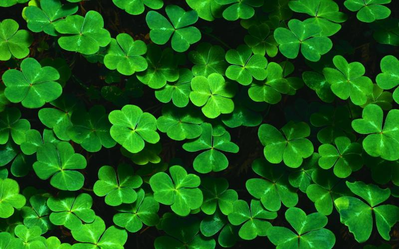 Animated Happy New Year D Hd 4 Leaf Clover Patch Wallpaper Download Free 67939