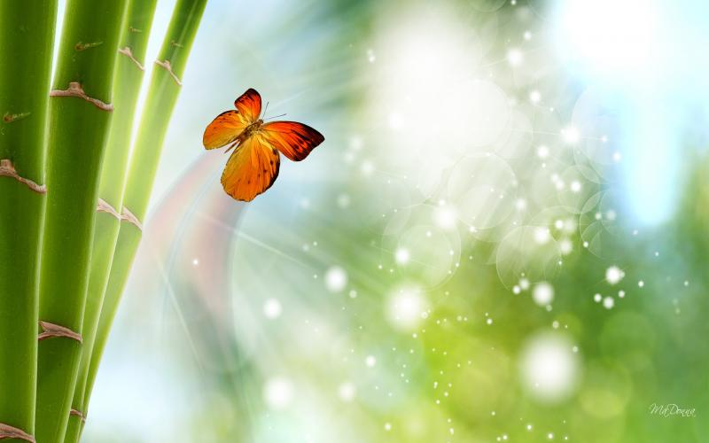 Cute Love Wallpapers Hd Full Size Hd Bamboo Butterfly Lights Wallpaper Download Free 51206