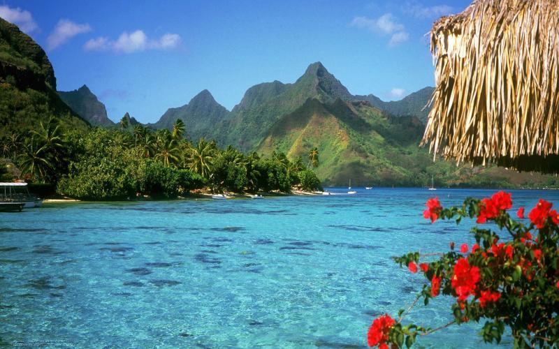 Microsoft Animated Wallpaper Hd French Polynesia Beach Wallpaper Download Free 54210