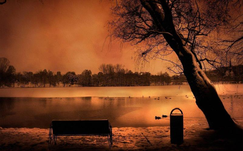 Cute Ducks In Water Wallpaper Hd Haunting Winter Scene Wallpaper Download Free 59829