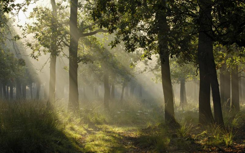 Cute Animated Hd Wallpapers Hd Mystical Light In A German Forest Wallpaper Download