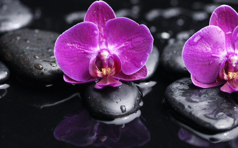 Cute Baby Face Wallpaper Hd Orchid On The Rocks Ii Wallpaper Download Free 49565