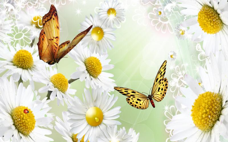 Good Night Hd Wallpaper 3d Love Hd Outshine The Daisies Wallpaper Download Free 49662