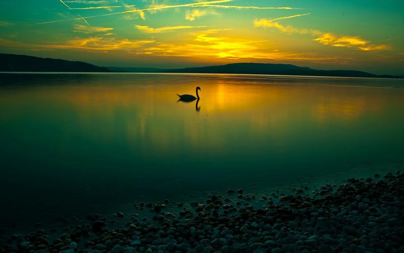 Microsoft 3d Desktop Wallpaper Hd Amazing Calm Lake Lone Swan Wallpaper Download Free