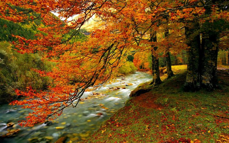 3d Falling Leaves Animated Wallpaper Hd Forest Creek In Autumn Wallpaper Download Free 60009