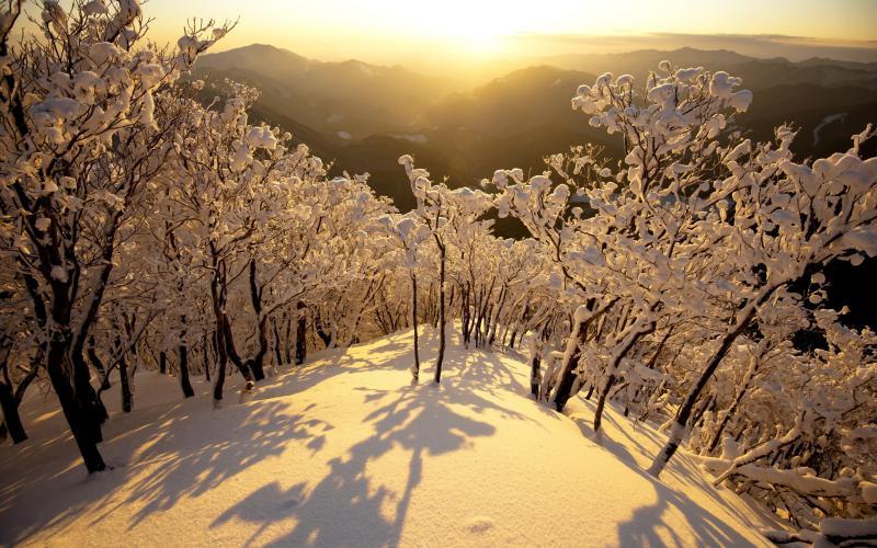 Good Night Wallpaper 3d Download Hd Sunny Winter Day Wallpaper Download Free 60994