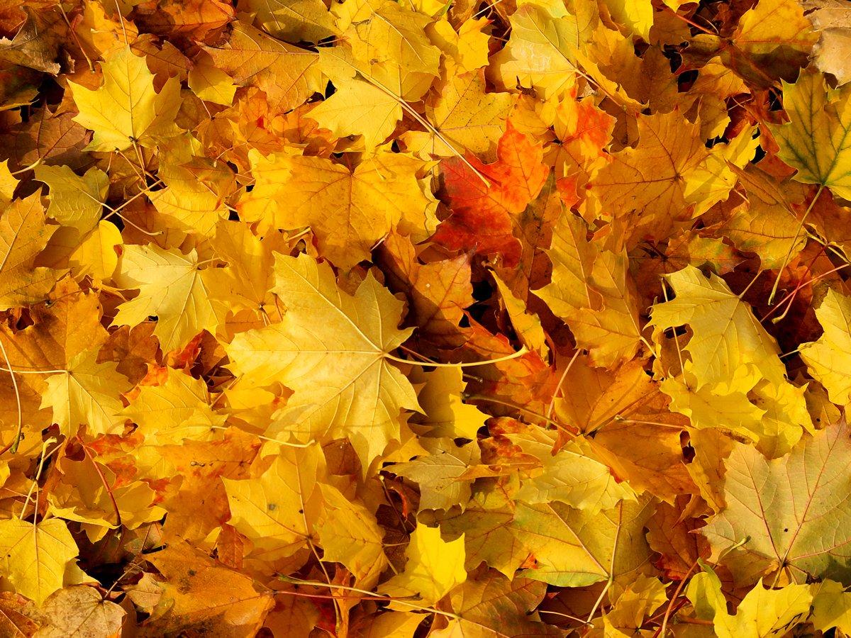 Orange Fall Peony Wallpaper Free Autumn S Carpets Stock Photo Freeimages Com