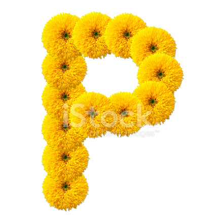 Letter P The Alphabet of Flowers Isolated on White Background Stock