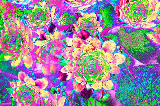 3d Rainbow Psychedeli Wallpaper 迷幻花园背景 照片素材 Freeimages Com