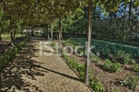 Grapevine Pergola Stock Photos - FreeImages.com
