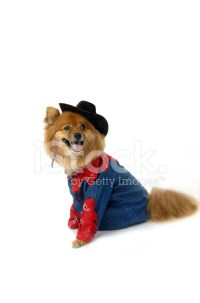 Western Costume on Pomeranian stock photos - FreeImages.com
