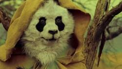 wasteland-panda