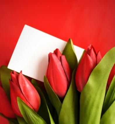 Senti Wallpapers With Quotes Foto Ad Alta Definizione Di Tulipano Fiori Verde Foto