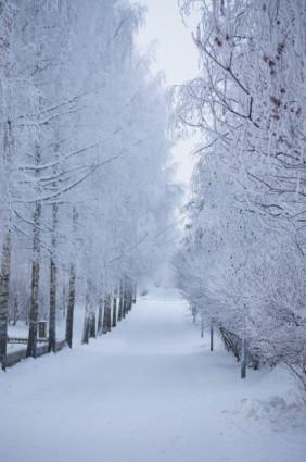 Free Download Of Christmas Wallpaper With Snow Falling 겨울 눈도로 겨울 무료 사진 무료 다운로드