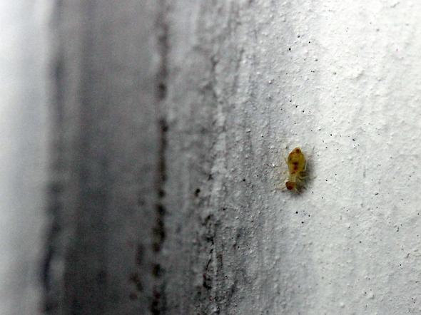 Badezimmer Kleine Weisse Tierchen | Kleine Fliegen In Küche Hilfe ...