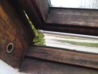 Schwarzschimmel am Holzfenster? Wie bekommt man ihn weg