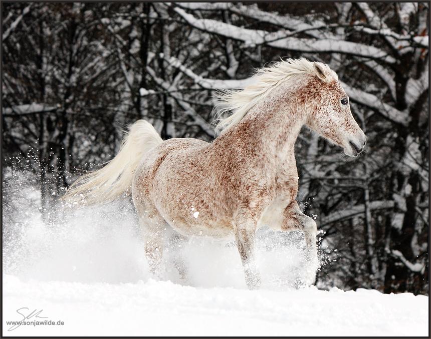 Hd Wallpapers 1080p Windows Welche Farbe Hat Das Pferd Pferde Fellfarbe