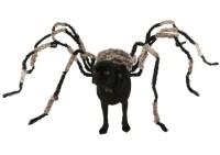 spider dog images - usseek.com