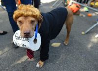 21 clever dog Halloween costumes from NYC's Halloween Dog ...