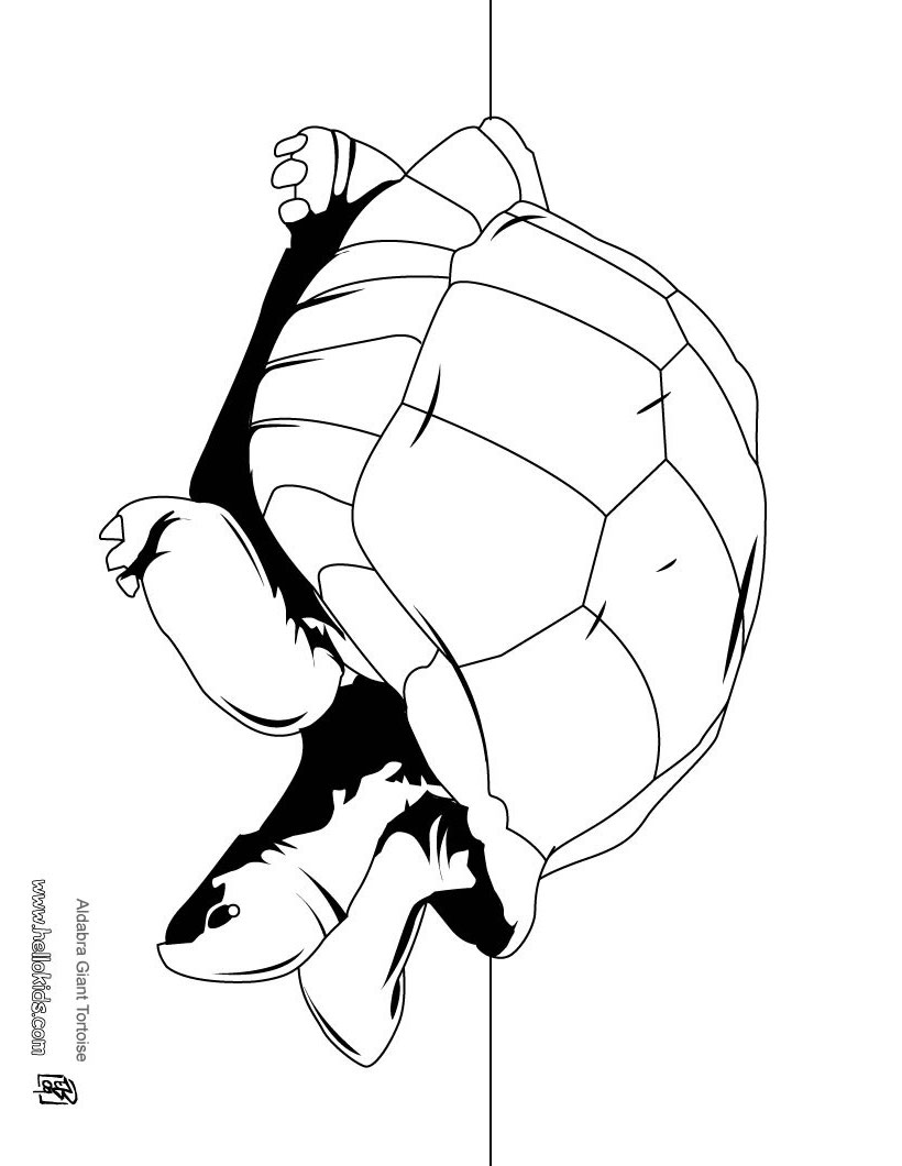 coloring pages reptile coloring page animals scorpion free turtle