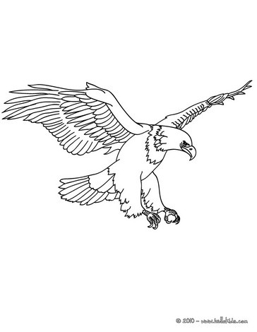 BIRD coloring pages - 90 free birds coloring pages  birds coloring